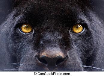 흑표범당, 눈