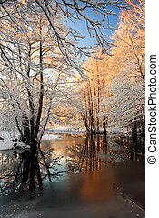 흰 서리, 겨울, 나무