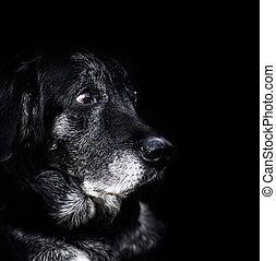 -, 오래 되는 개, 동물
