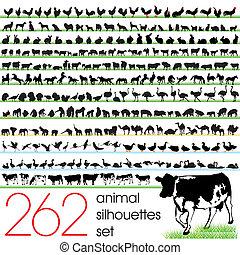 262, 실루엣, 세트, 동물