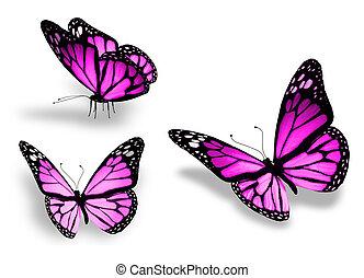 3, 고립된, 배경, 제비꽃, 백색, 나비
