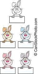 3., 성격, 토끼, 세트, 수집