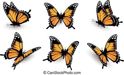 6, vector., set., 나비