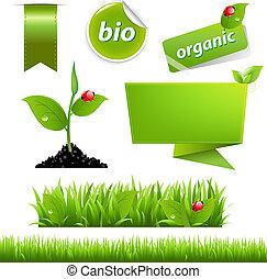 eco, 무당벌레, 세트, 잎, 녹색