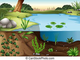 ecosytem, 연못