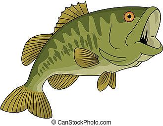 fish, 베이스