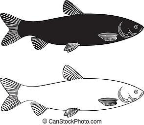 fish, 풀, -, 잉어