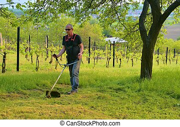 garden., cutter., 개념, 원예, midle, 솔, 성숙시키다, 을 사용하여, 노인들, 남자