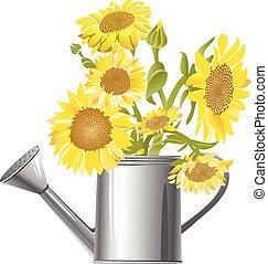 gardening sunflowers