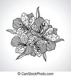 isolated., 모듬 명령, 꽃, 검정, 난초
