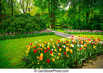 keukenhof, 네덜란드, 정원, 나무., 튤립, 꽃