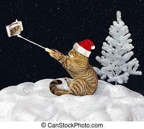 selfie, 제작, 눈, 고양이