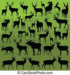 sheep, 산, 큰사슴, 동물, 뿔이 있는, 사슴, 벡터