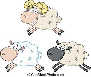 sheep, 세트, 3., 특성, 수집