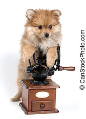 spitz-dog, 커피 분쇄기