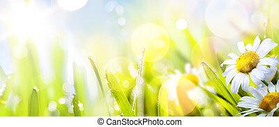 springr, 떼어내다, 명란한, 배경, 예술, 꽃