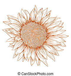 sunflower., 벡터