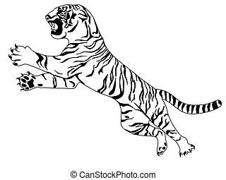 tiger, 백색